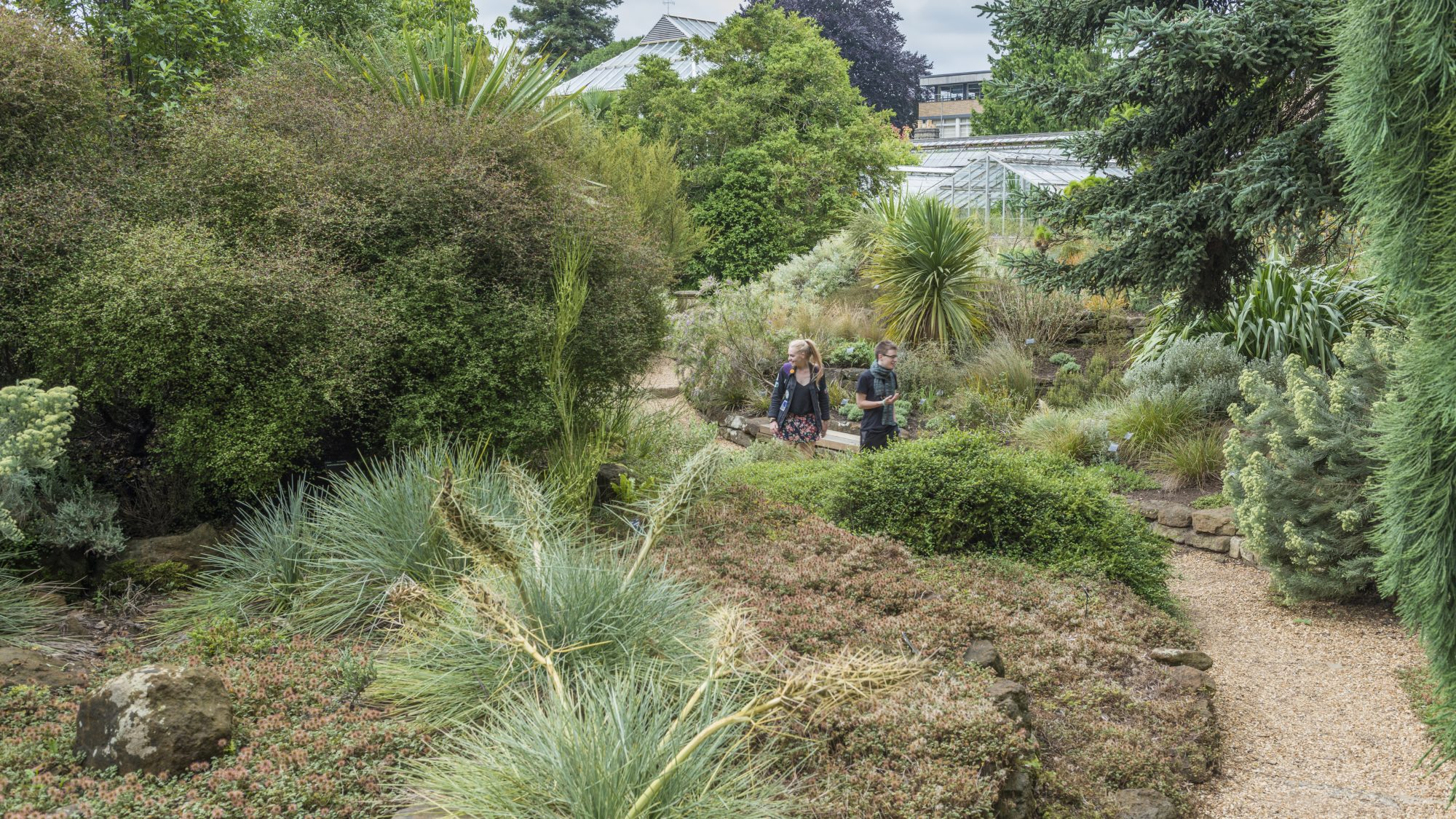 Visitors walking through the Terrace Garden (New Zealand Flora).