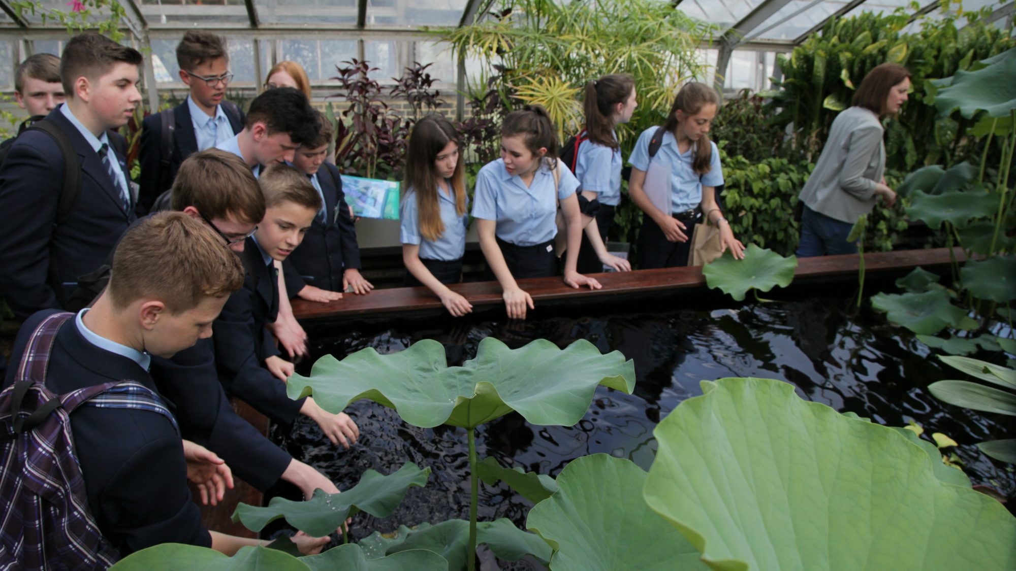 Students studying the Sacred Lotus, growing in tropical glasshouse at Cambridge University Botanic Garden.