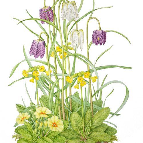 Illustrating wild flowers in spring