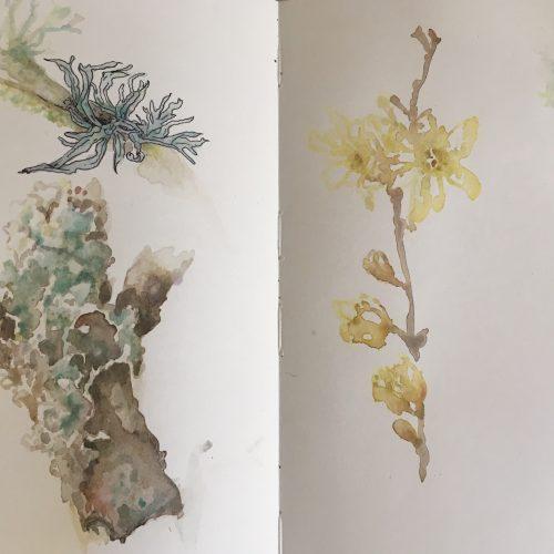 Sketching plants in the garden: September