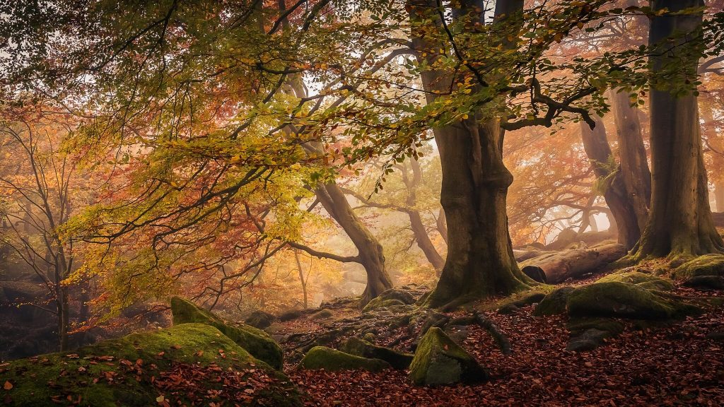 'Autumn in Padley Gorge' by Dave Fieldhouse, winner of the Trees, Woods and Forests category. Photo of trees in sepia tones.