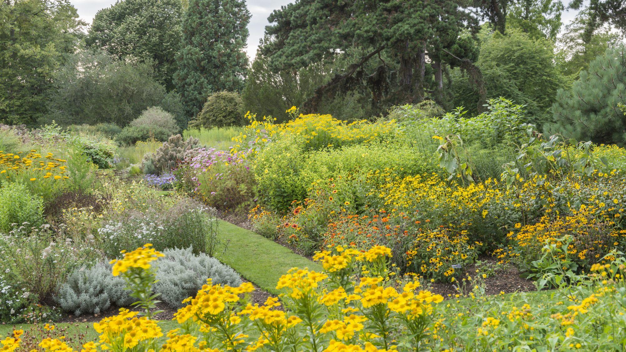 Systematic beds at Cambridge University Botanic Garden