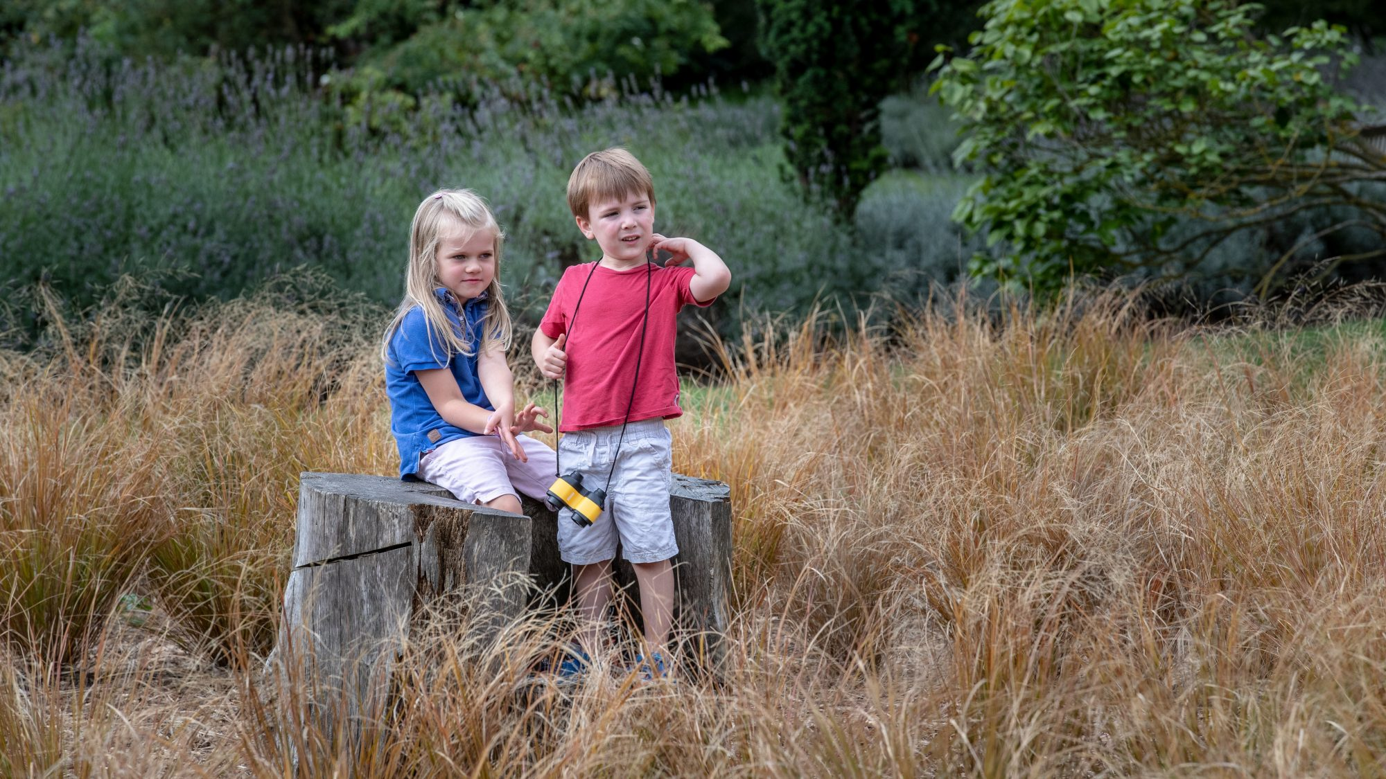 Children playing in the Anemanthele lessoniana, Grass Maze.