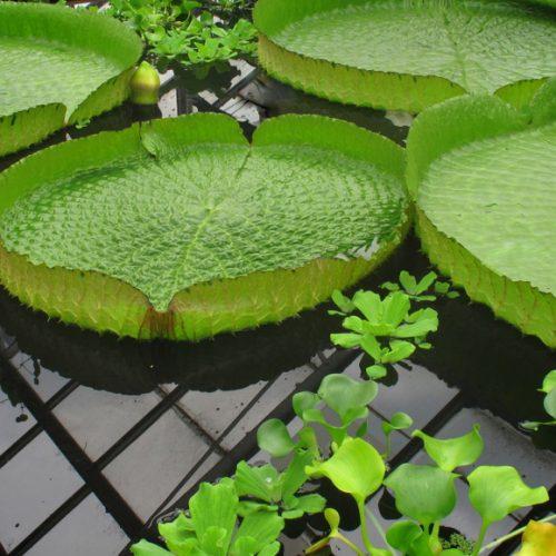 The garden portfolio: more creative garden photography