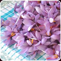 The history of saffron