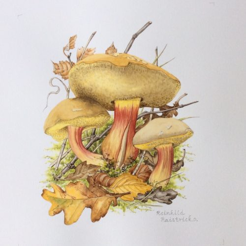 FULLY BOOKED Illustrating plants and fungi in autumn