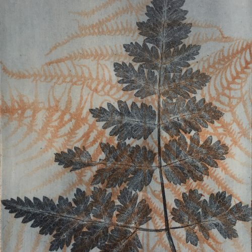 Illustrating Ferns Masterclass
