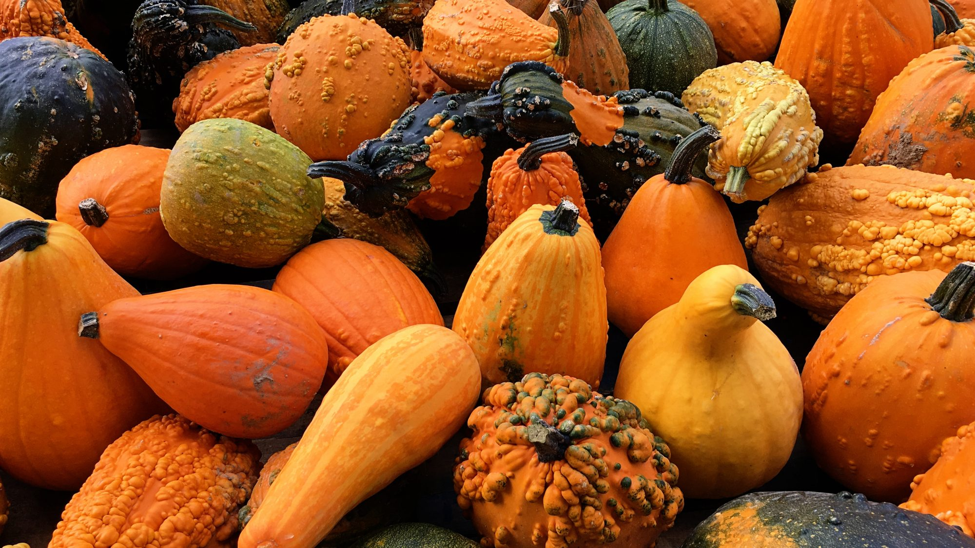 A mass of orange, yellow and green squashes. pumpkins and gourds