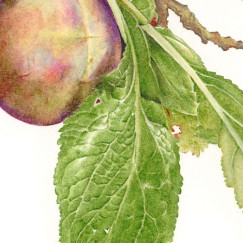 FULLY BOOKED Coloured pencil illustration masterclass: leaves