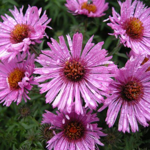 Understanding the biology of flowers