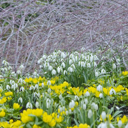 Winter Garden celebrates 40 years of stunning winter colour 1979-2019