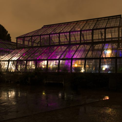 Botanic Nights – Cam Lates in the Glasshouse Range