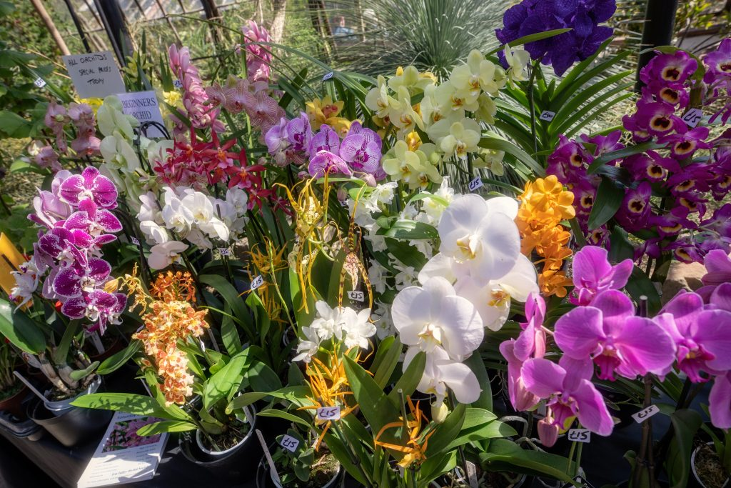 Orchids at the Festival of Plants