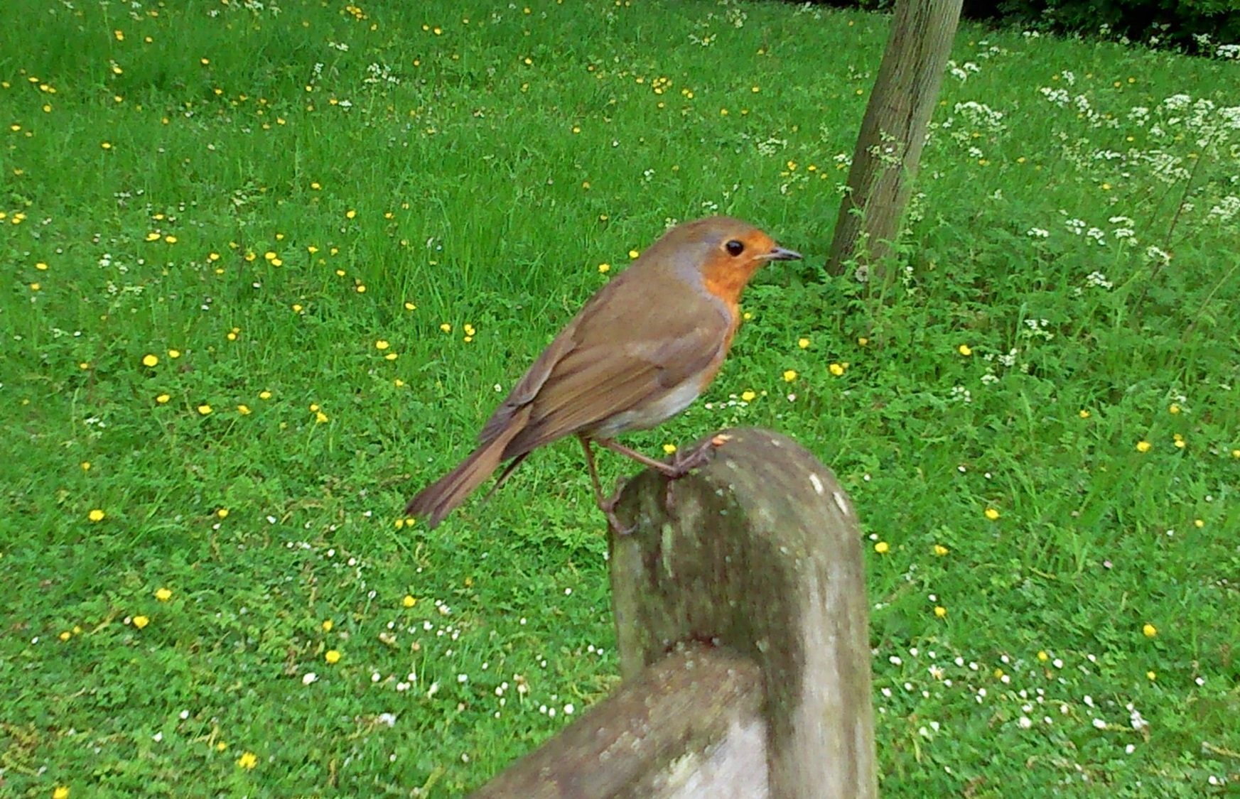 A robin perched on a bench, just off Lynch Walk.