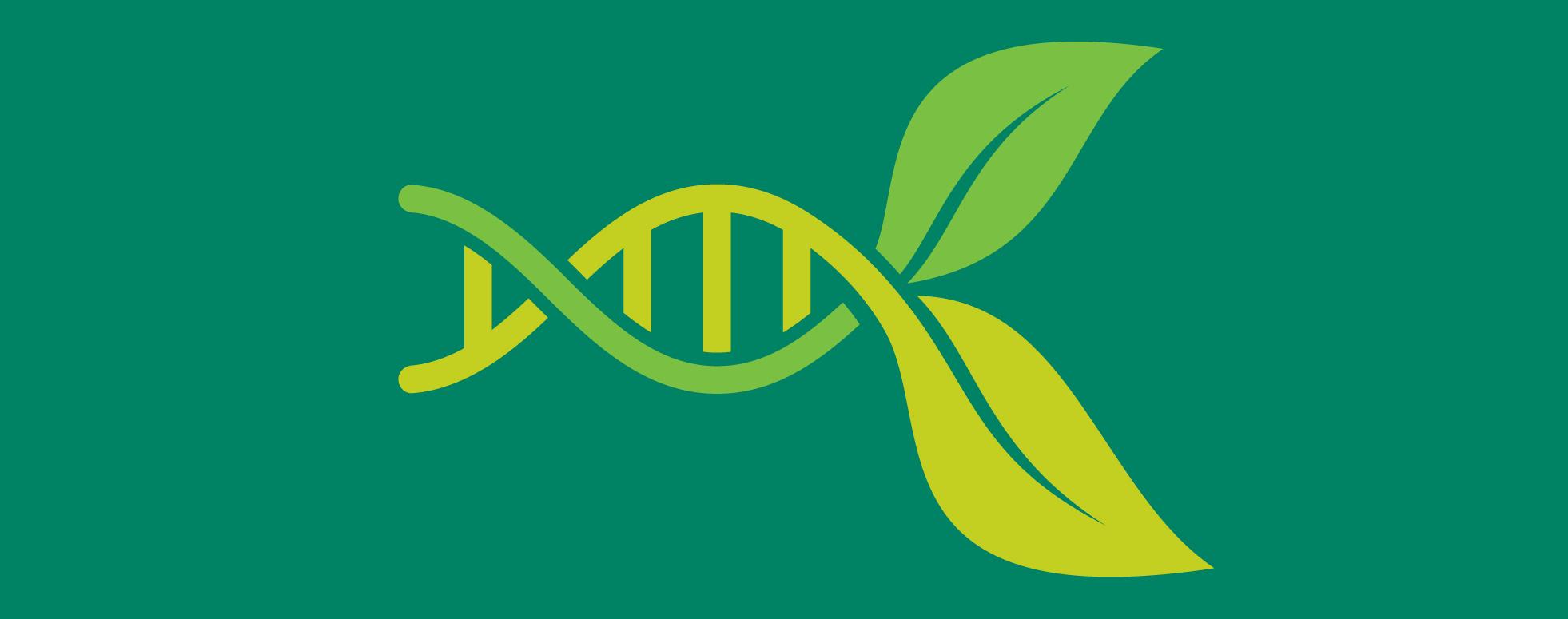 Gene expression image. The mechanics of plant development.