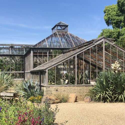 BBC news: Mystery 'tequila plant' agave to flower in Cambridge after 57 years