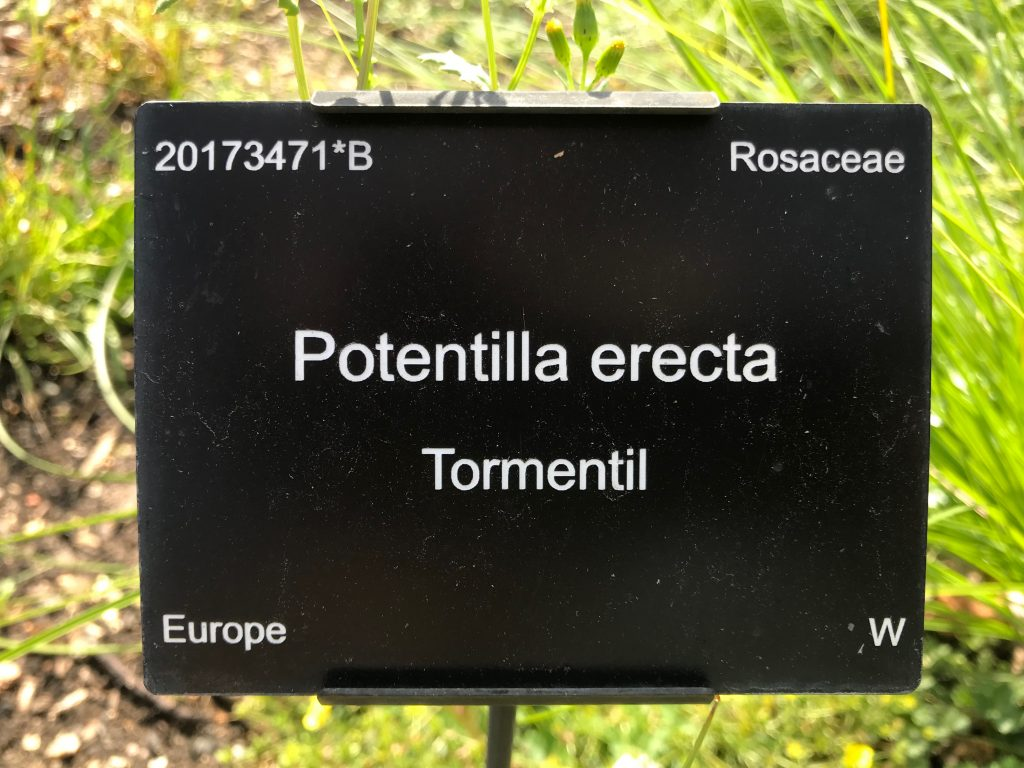 A Cambridge University Botanic Garden Plant label