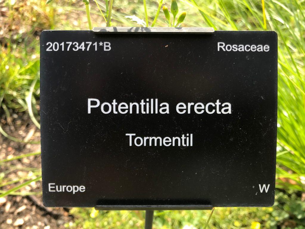 A Cambridge University Botanic Garden Plant label
