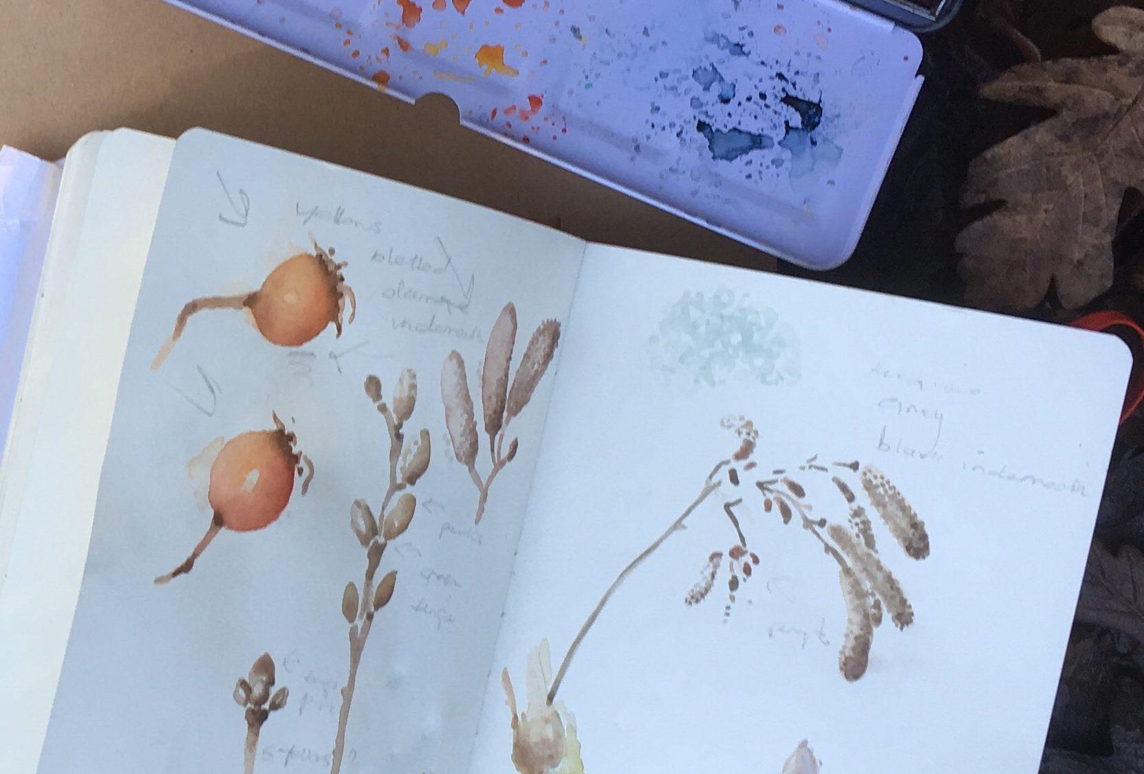 Botanical watercolour.