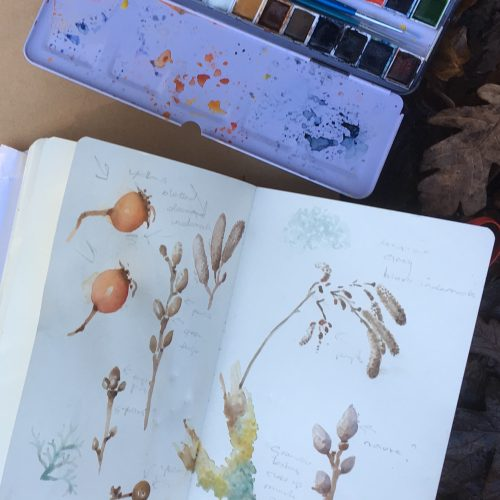 Sketching in the Garden: Early autumn