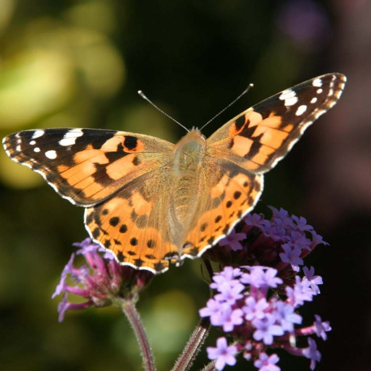 NOW ONLINE – Recording wildlife in your garden for science and conservation