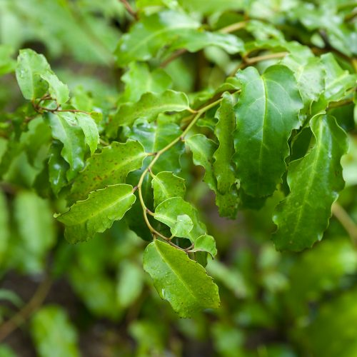 Plant Evolution Trail