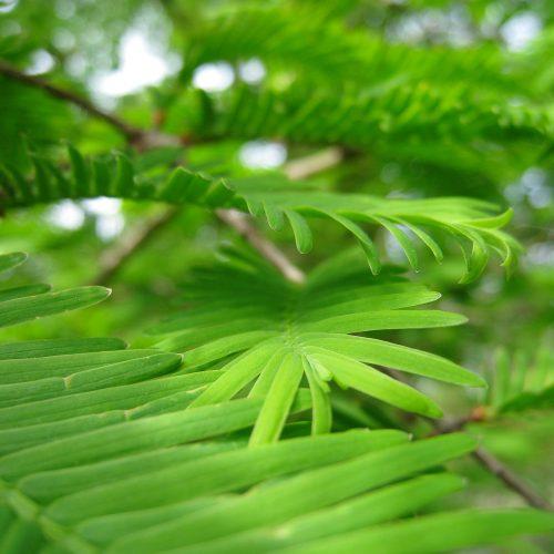 Trees of the Botanic Garden