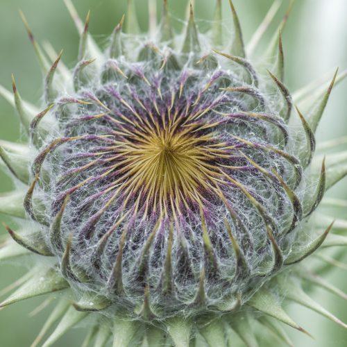 Cambridge University Botanic Garden Living Collections Strategy