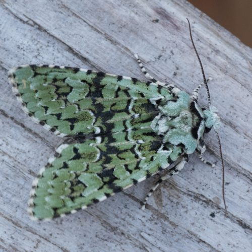 CANCELLED Moth surveying - an Earth Optimism Event