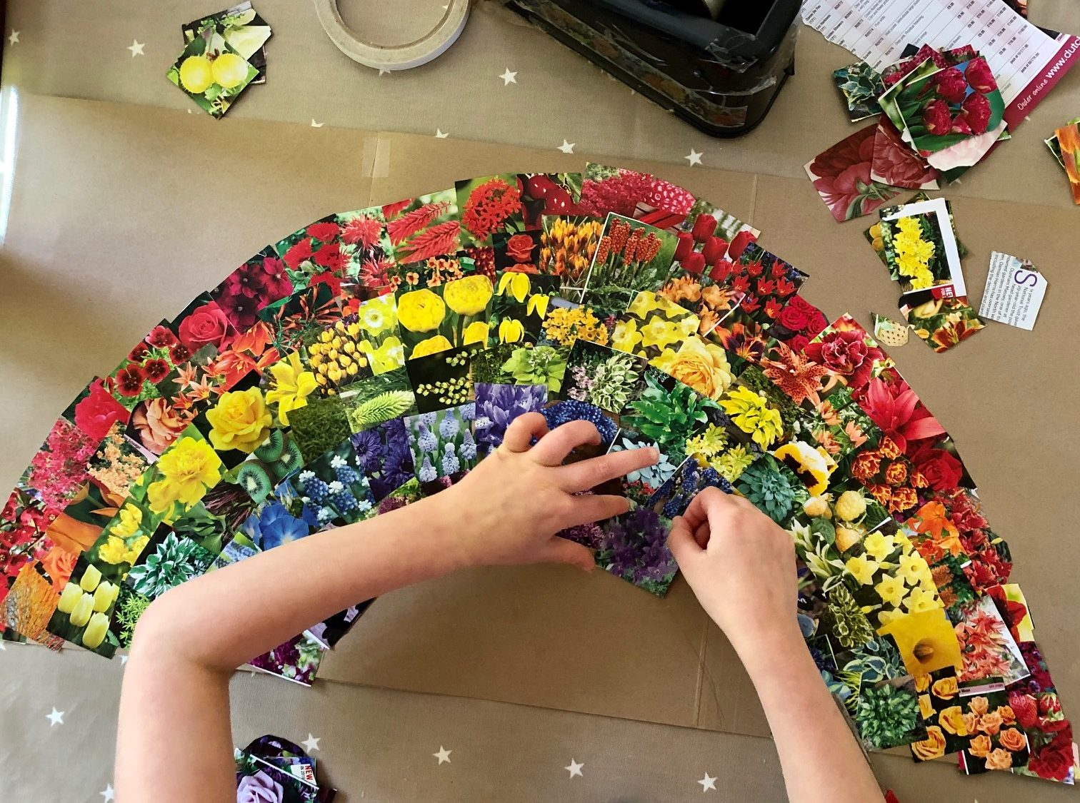 Image of child making a rainbow collage of flower pictures