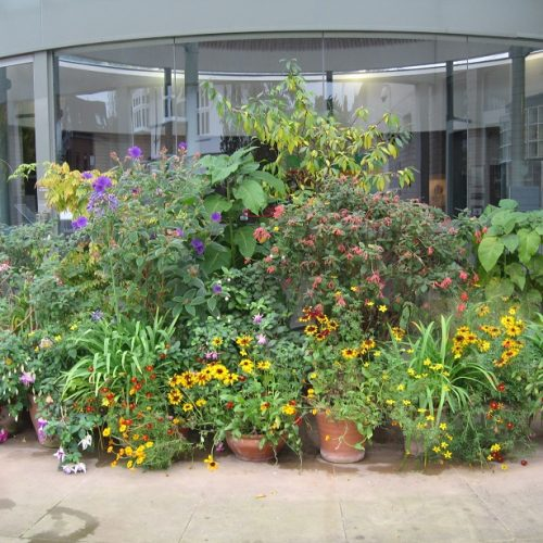 CANCELLED – Murray Edwards College Garden Tour