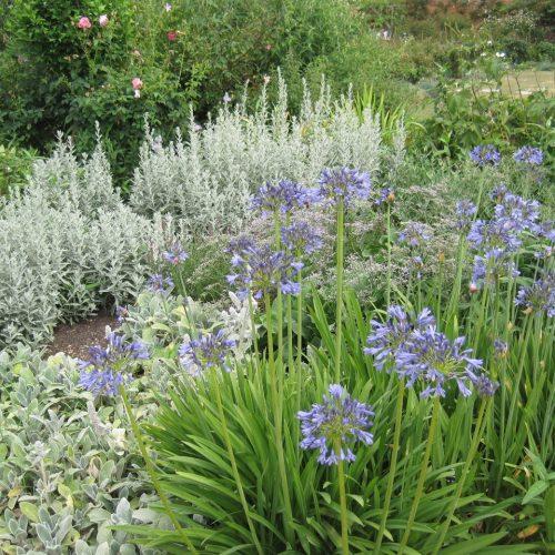ONLINE COURSE The Edwardian flower garden