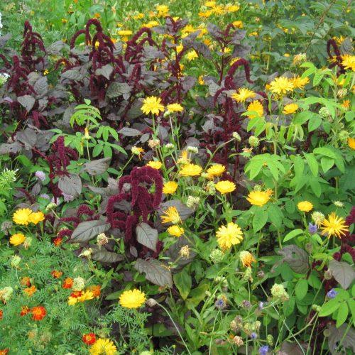 ONLINE COURSE The Elizabethan flower garden