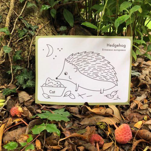 Autumn Animals – Self-led family activity
