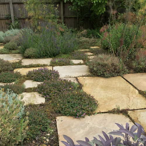 ONLINE COURSE Thinking of becoming a garden designer?