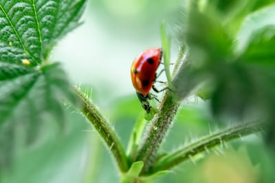 ONLINE COURSE Introduction to pests and diseases: plant husbandry and plant health