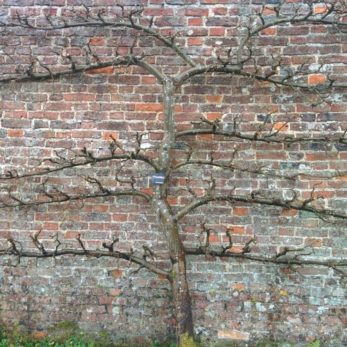 ONLINE & GARDEN TWO PART COURSE: Introduction to pruning: science and anatomy of trees and shrubs
