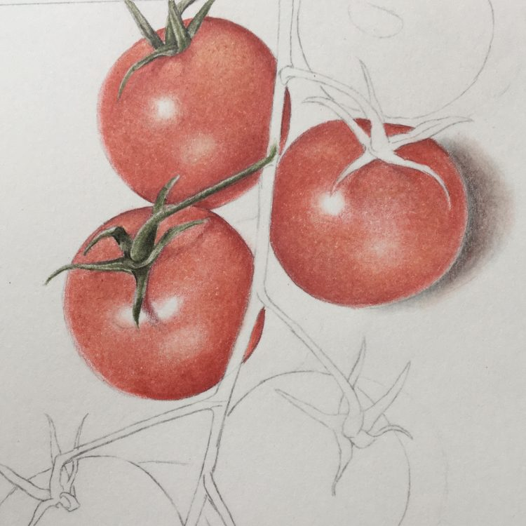 ONLINE COURSE Step by step botanical art: colouring cherry tomatoes