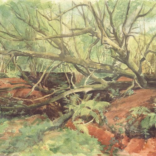 FULLY BOOKED Introduction to watercolour: painting the garden landscape