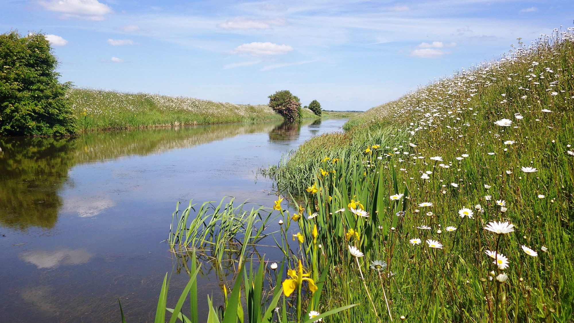 Medlam Drain, Credit: Martin Redding