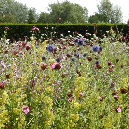 Dry perennial meadow