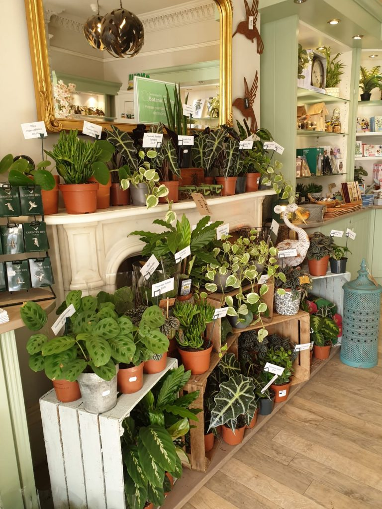 A selection of products available at the Garden Shop, such as plants, lanterns, pots and tea towels.