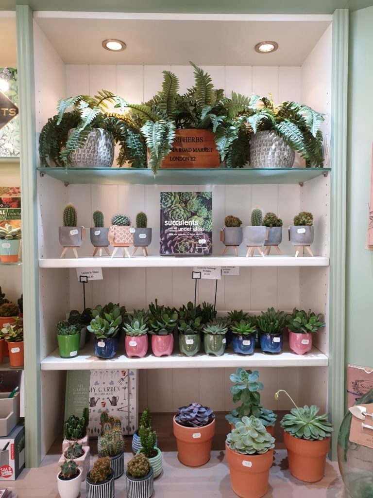 A display of small succulents in colourful pots, and books.