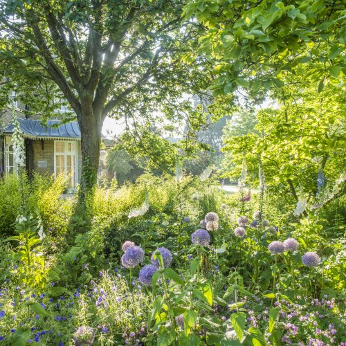 Photography Competition – capture the spirit and beauty of Cambridge University Botanic Garden