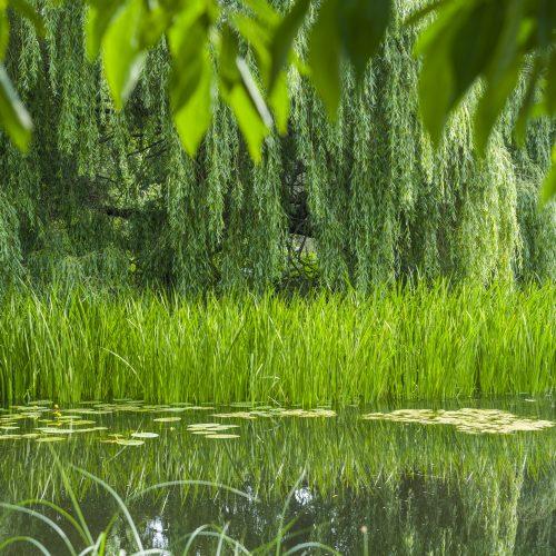 ONLINE COURSE Exploring garden poetry