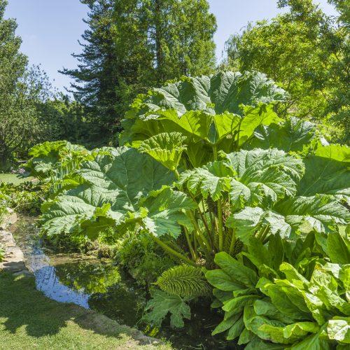 ONLINE COURSE Water gardening