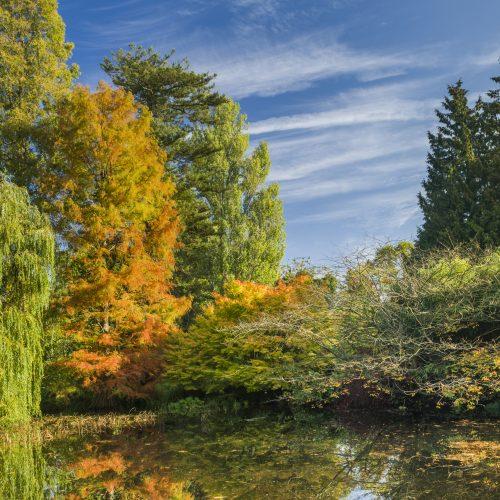 Autumn Trees Tour