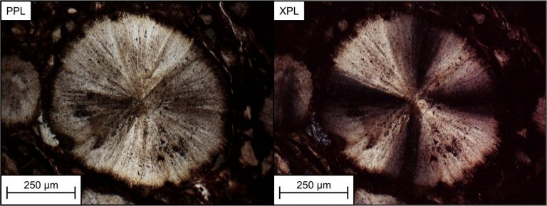 Climate Paleocene early to Eocene