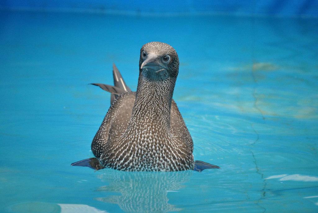 encontrou_um_animal_aves