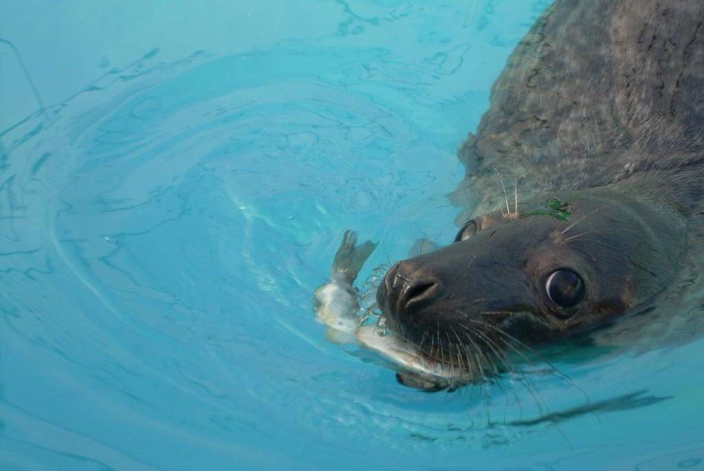 encontrou_um_animal_focas